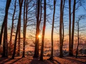 В петък времето остава топло за януари