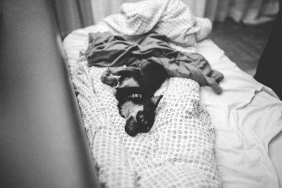 dog-791210_960_720.jpg